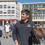 Guadalajara continúa con el control de proliferación de aves en la ciudad para reducir sus molestias