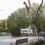 Dos heridos al caerle encima la rama de un árbol en la plaza de Bejanque
