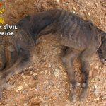El SEPRONA denuncia a un vecino de El Casar por dejar morir de hambre a uno de sus dos perros pero llega a tiempo de salvar al segundo