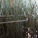Detenido por cultivar marihuana en una vivienda de El Casar tras una investigación de la Guardia Civil que incluyó drones