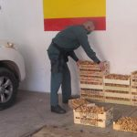 Tercera incautación de níscalos en una semana a buscadores furtivos: ahora 150 kilos en Atienza