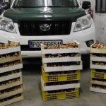 Comienza la temporada de setas y comienzan los furtivos a actuar: incautados 200 kilos de níscalos en Cogolludo y multadas tres personas