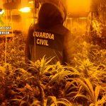 Detenido un vecino de Torrejón del Rey que tenía un cultivo de marihuana en un chalé abandonado de Valdeaveruelo: el fuerte olor de la droga lo delató
