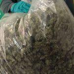 Tres vecinos de Madrid pillados con marihuana en controles del Estado de Alarma: en Uceda, con 5 kilos y en Illana con 293 esquejes para cultivar