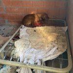 El Seprona multa al propietario de una finca en Poveda de la Sierra por tener 15 perros en condiciones higienicosanitarias deficientes
